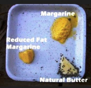 only humans eat margarine - all other species prefer butter - even ant prefer butter to margarine